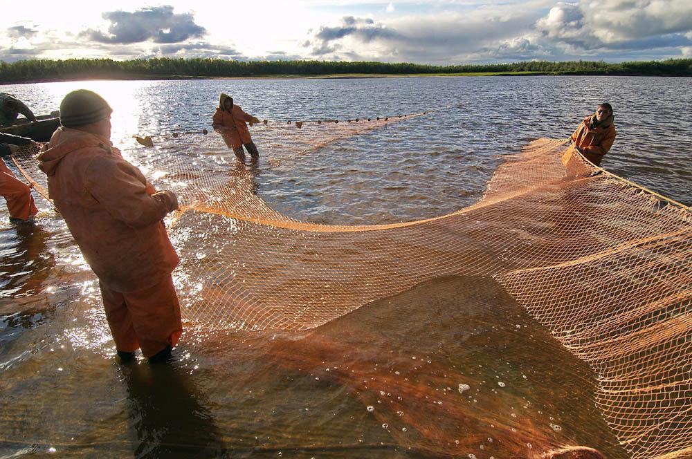 ловля бреднем на пруду