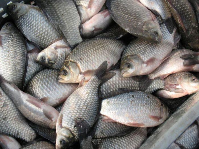 Купить живую рыбу в ставрополе